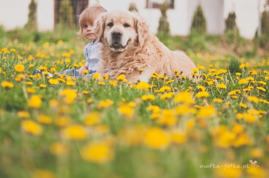 Fotografia dziecięca, wiosenna sesja plenerowa